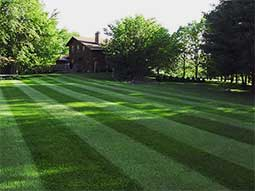 lawn fertilization makes for a green lawn in Cheyenne